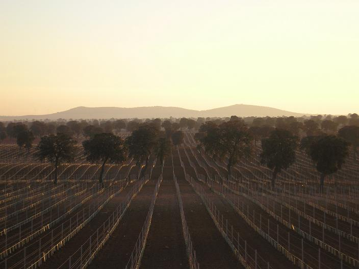 Corral de almaguer una potencia vitivin cola mundial - Corral de almaguer fotos ...